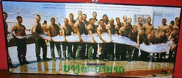 25 Häftiga Och Ovanliga Djur – Gloop Oarfish 56 Ft